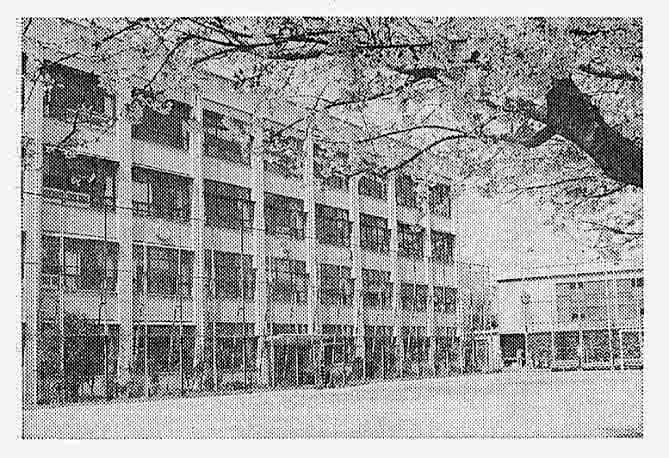 2019年2月4日 麻布警察署、母校の桜